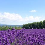 ペア・北海道旅行